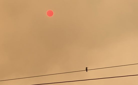 image of hummingbird in profile, resting on telephone wire, against a smoke-filled sky with a hazy pink sun