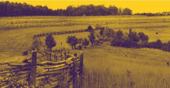 image of split rail fence crossing meadow with forest in the background