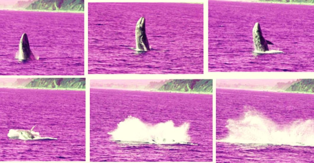 6 images of a whale breaching and summering, arranged chronologically in a grid