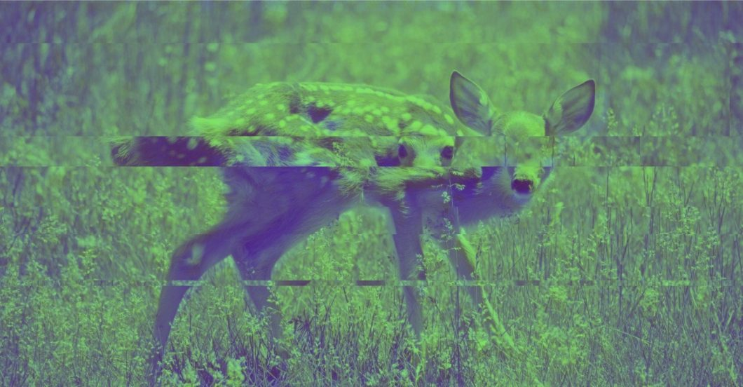 image of fawn split into offset horizontal sections by screen glitch